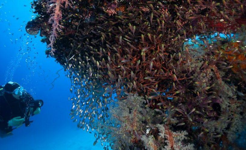 wycieczka-nurkowanie-2