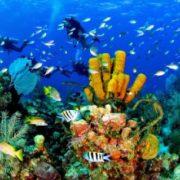 wycieczka-nurkowanie-catalina-1