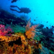 wycieczka-nurkowanie-catalina-2